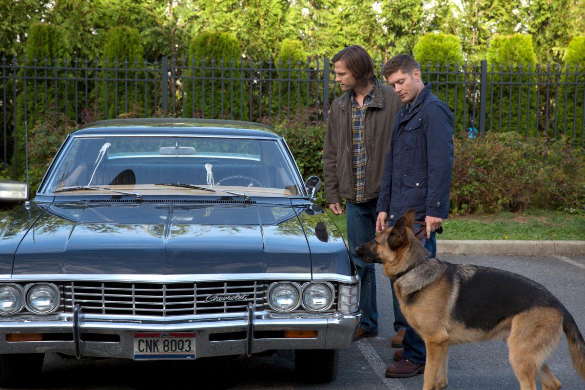09x05 | Dog Dean Afternoon